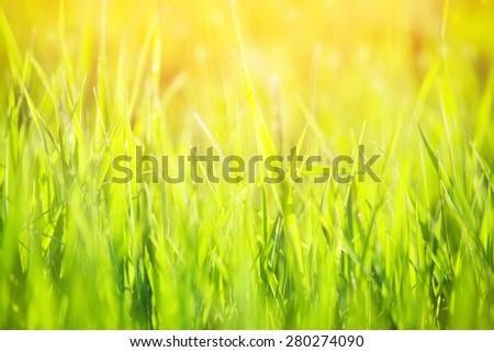 green grass in sunlight - stock photo