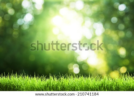 green grass in sunny forest - stock photo