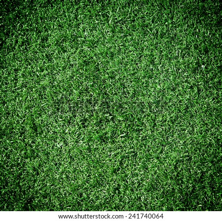 Green grass in the background - stock photo