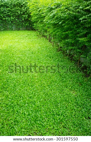 green grass in the garden. green grass with tree wall - stock photo
