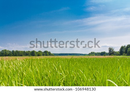 Green grass in the meadow against the blue sky landscape