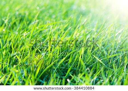 Green grass in the sunshine