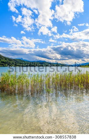 Green grass in water of Worthersee lake in summer, Austria