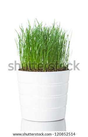 green grass in white pot, isolated on white - stock photo