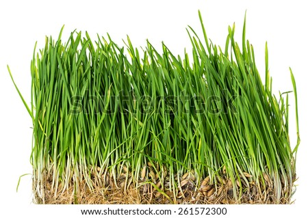 Green grass isolated - stock photo