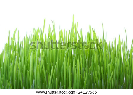 Green grass isolated on white background, shallow dof - stock photo