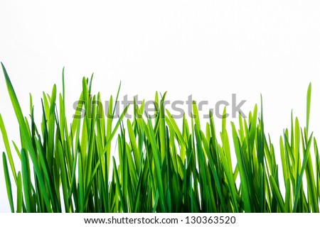 Green grass isolated on white background used for projects and websites. - stock photo