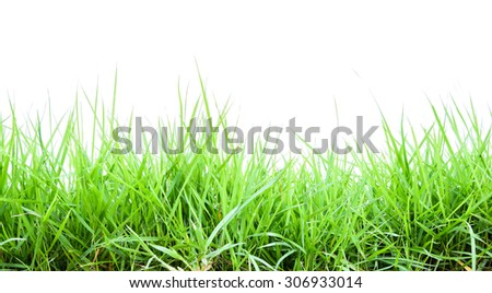 Green grass isolated on white background with clipping path - stock photo