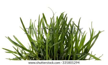 Green grass isolated white background. Sedge. - stock photo