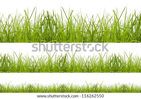 green grass isolation on the white backgrounds - stock photo
