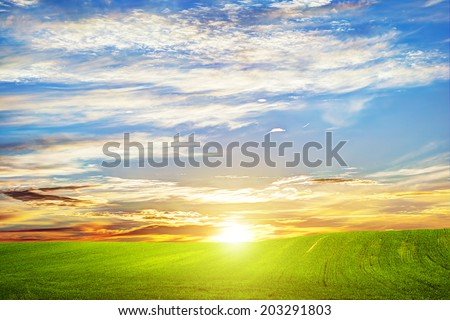 Green grass landscape at sunset. Romantic clouds. HD background