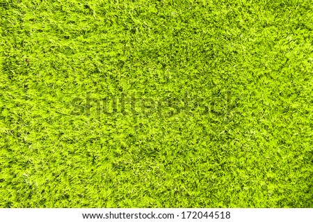 green grass - lawn meadow field court ground surface outdoor park summer mowed clean background