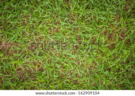 green grass lawn on soil background image - stock photo
