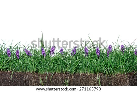 Green grass lawn spring flowers, isolated on white. Floral nature flower background. - stock photo