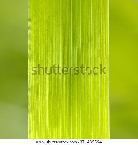 Green Grass Macro - stock photo