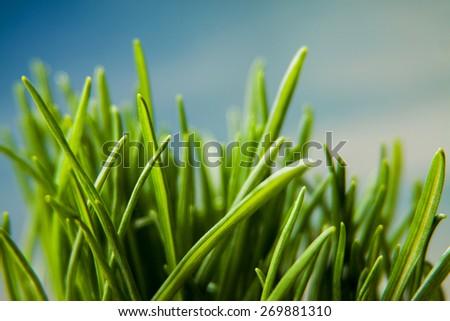 green grass macro natural background - stock photo