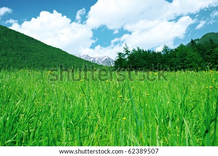 Green grass, mountains and forest below clouds.