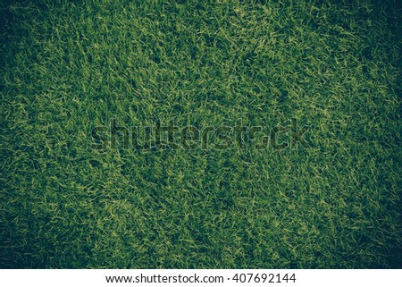 Green grass. natural background texture. - stock photo