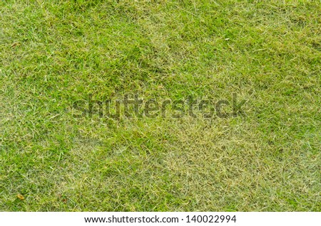 Green grass of golf field - stock photo