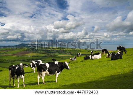 Green grass of the Dorset countryside overlooking Portland and the Fleet - stock photo