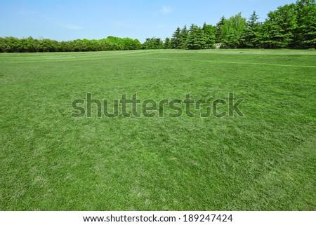 Green grass on a golf field, sunny - stock photo