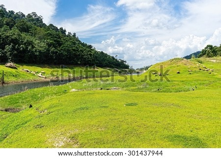Green grass on a hill. - stock photo