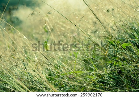 Green grass on a meadow with shiny dew water drops, vintage abstract natural background - stock photo