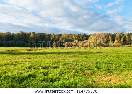 green grass on autumn forest border in sunny afternoon - stock photo