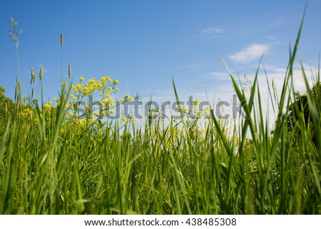Green grass on blue sky. Grass and sky. Summer panorama of wild nature. A large sky on a summer day. - stock photo