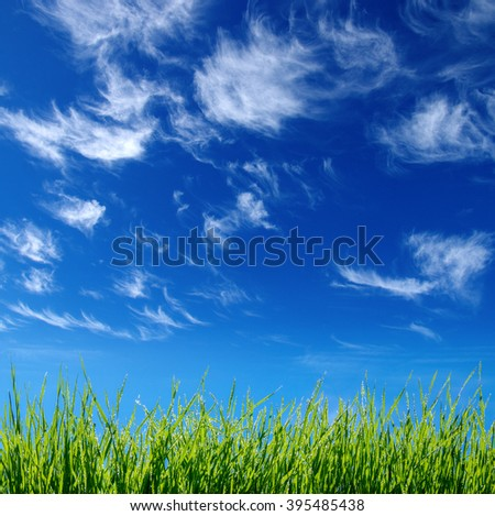 Green grass on clouds - stock photo