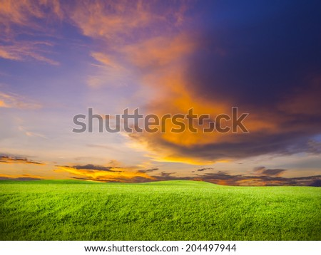 green grass on colorful sunset background