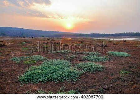 green grass on dry land with sunset background