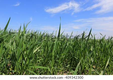 Green grass on spring field - stock photo