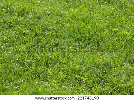 Green grass on sunny day background - stock photo