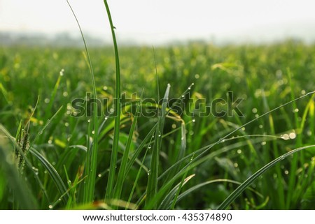 Green grass on sunny meadow - stock photo
