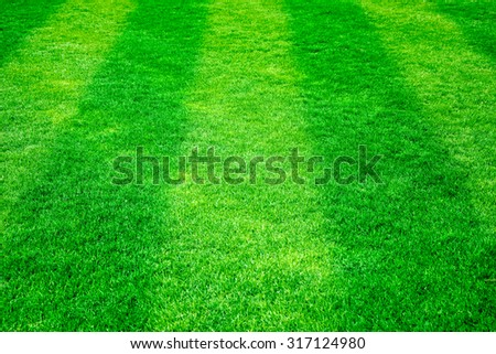 Green grass on the football field. Nature background - stock photo