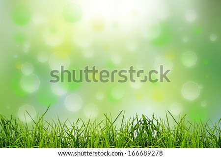 green grass on the green backgrounds