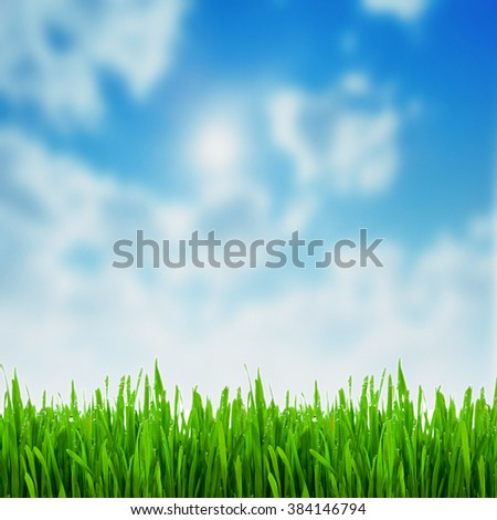 green grass on the sky backgrounds - stock photo