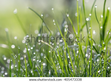 green grass on which the dew - stock photo
