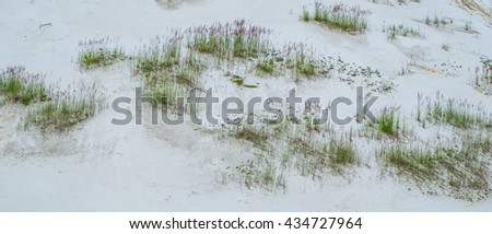 Green grass on white sand. - stock photo