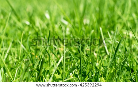 green grass out of focus with a blurred background