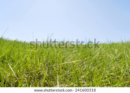 green grass over blue sky background - stock photo
