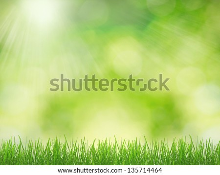 Green grass over sun lighted background