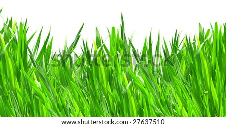 Green grass panorama isolated on white background - stock photo