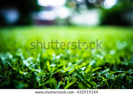 Green grass pattern texture for nature background with dark tone shallow DOF and soft blurred - stock photo