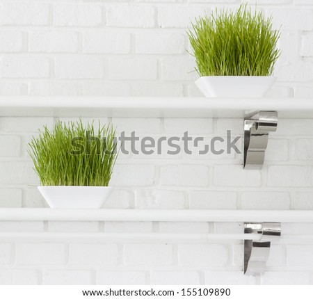 Green grass plant decorating - stock photo