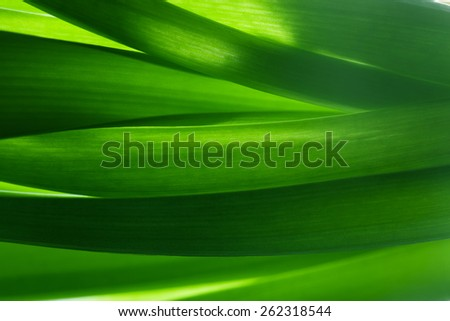 Green grass, plants background in backlight. Fresh, nature, nature composition. - stock photo