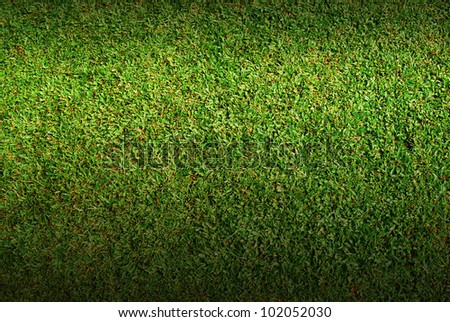 Green Grass rice field background texture for design and artwork