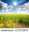 green grass rice field flower blue sky rainbow background nature cloudy park outdoor for design - stock photo