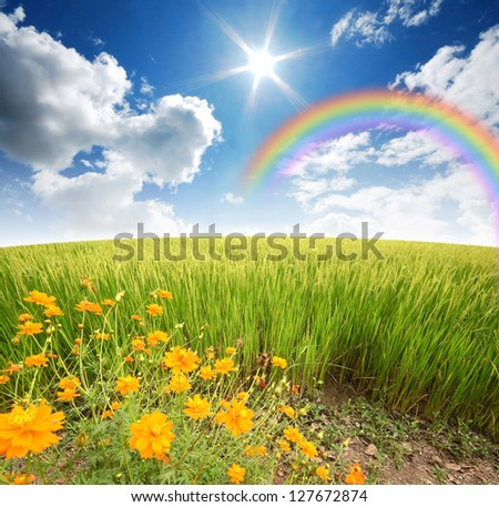 green grass blue sky flowers. Green Grass Rice Field Flower Blue Sky Rainbow Background Nature Cloudy Park Outdoor For Design Flowers Y
